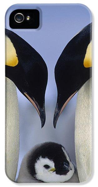 Emperor Penguin Family IPhone 5 / 5s Case by Tui De Roy