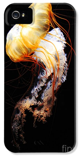 Enigma IPhone 5 / 5s Case by Andrew Paranavitana