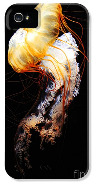 Poisonous iPhone 5 Cases - Enigma iPhone 5 Case by Andrew Paranavitana