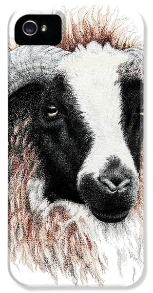 Ewe iPhone 5 Cases - Ewe iPhone 5 Case by Sandra Moore