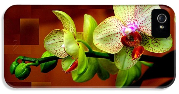 Raw Sienna iPhone 5 Cases - Exotic Orchid iPhone 5 Case by Barbara Simpson