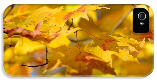 Trees iPhone 5 Cases - Fall Colors iPhone 5 Case by Sebastian Musial
