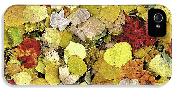 Forrest iPhone 5 Cases - Fall Leaf Vignette iPhone 5 Case by JQ Licensing