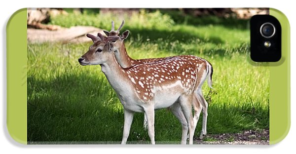Fallow Deer In Richmond Park IPhone 5 / 5s Case by Rona Black