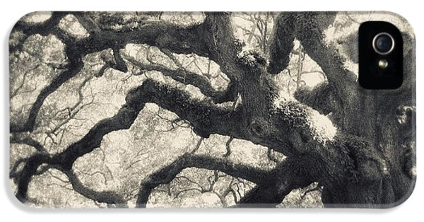 Old Tree iPhone 5 Cases - Father Time iPhone 5 Case by Amy Tyler