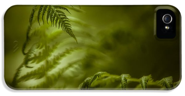 Springs Coil iPhone 5 Cases - Fern Encounter iPhone 5 Case by Chris Bordeleau