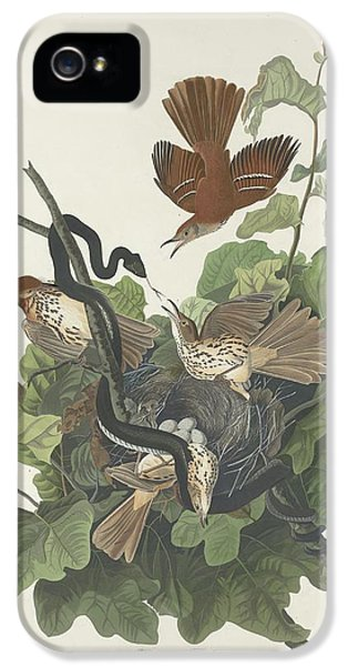 Ferruginous Thrush IPhone 5 / 5s Case by John James Audubon