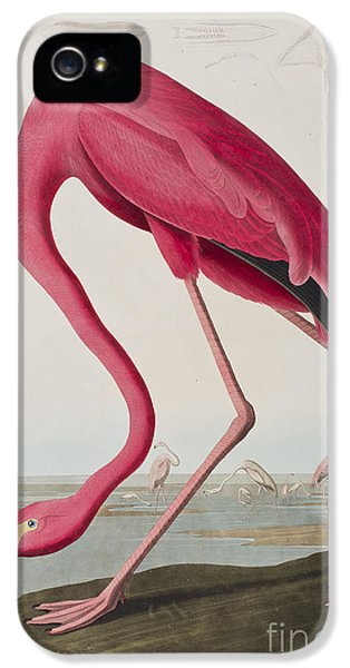 Flamingo IPhone 5 / 5s Case by John James Audubon