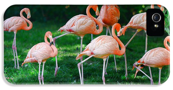 Flamingo iPhone 5 Cases - Flamingo iPhone 5 Case by Paul Ward