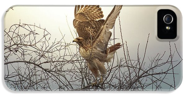 Red Tailed Hawk iPhone 5 Cases - Flashing The Truckers iPhone 5 Case by Robert Frederick