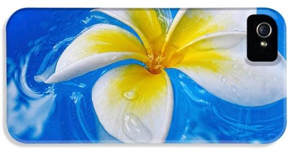 Yellow And White Plumeria Flower Frangipani iPhone 5 Cases - Floating Frangipani - Plumeria Alba iPhone 5 Case by Kaye Menner
