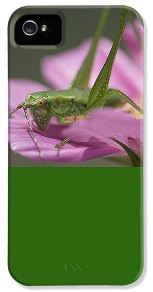 Flower Hopper IPhone 5 / 5s Case by Michael Eingle