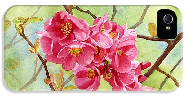Flowering iPhone 5 Cases - Flowering Quince with Background iPhone 5 Case by Sharon Freeman