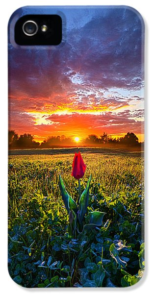 Blue Leaf iPhone 5 Cases - For Your Love iPhone 5 Case by Phil Koch