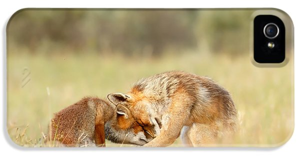 Fox Kits iPhone 5 Cases - Foreverandeverandever - Red Fox Love iPhone 5 Case by Roeselien Raimond