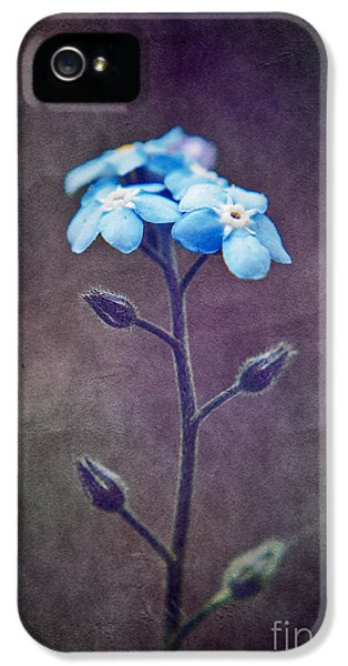 Forget Me Not 04 - S6ct7b IPhone 5 / 5s Case by Variance Collections