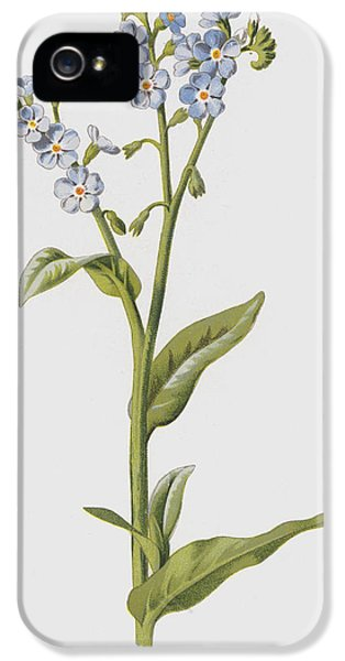 Forget Me Not IPhone 5 / 5s Case by Frederick Edward Hulme