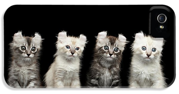 Four American Curl Kittens With Twisted Ears Isolated Black Background IPhone 5 / 5s Case by Sergey Taran
