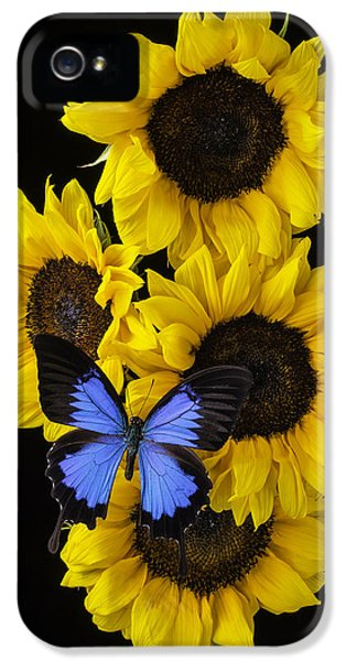 Softly iPhone 5 Cases - Four Sunflowers And Blue Butterfly iPhone 5 Case by Garry Gay