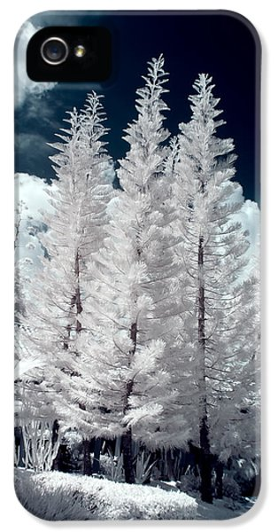 Infrared iPhone 5 Cases - Four Tropical Pines Infrared iPhone 5 Case by Adam Romanowicz