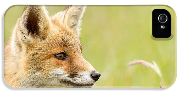 Afternoon iPhone 5 Cases - Fox Kit Dreams iPhone 5 Case by Roeselien Raimond
