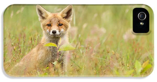 Fox Kits iPhone 5 Cases - Fox Kit in the Filed iPhone 5 Case by Roeselien Raimond