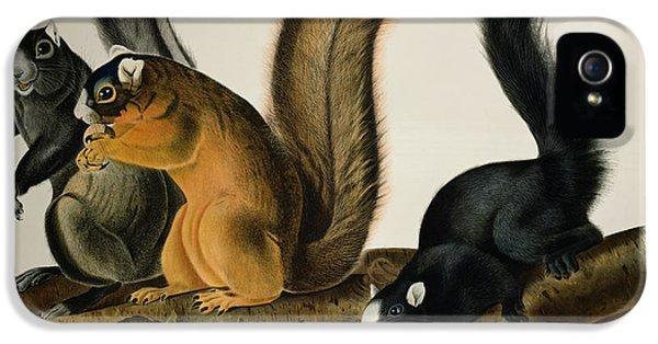 Fox Squirrel IPhone 5 / 5s Case by John James Audubon