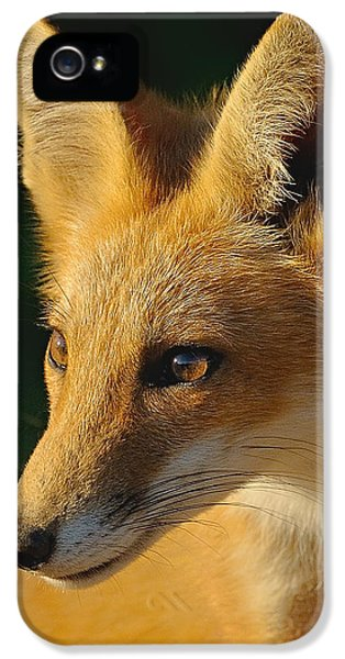 Young Foxes iPhone 5 Cases - Foxy Lady iPhone 5 Case by William Jobes