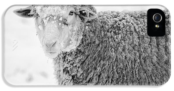 Ewe iPhone 5 Cases - Frozen Dinner iPhone 5 Case by Mike  Dawson