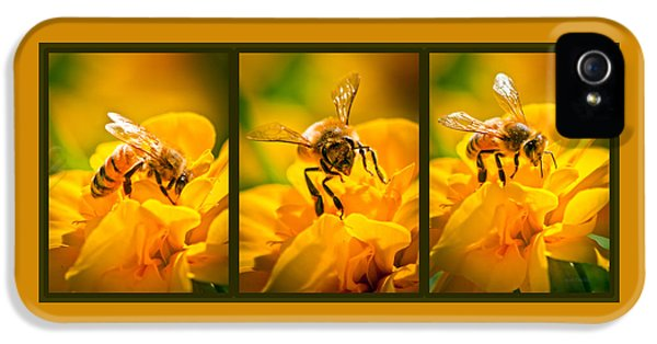 Bee iPhone 5 Cases - Gathering Pollen Triptych iPhone 5 Case by Bob Orsillo