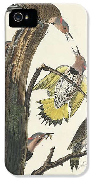 Gold-winged Woodpecker IPhone 5 / 5s Case by John James Audubon
