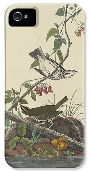 Golden-crowned Thrush IPhone 5 / 5s Case by John James Audubon