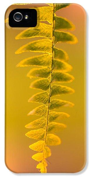 Fern iPhone 5 Cases - Golden Fern iPhone 5 Case by Shane Holsclaw