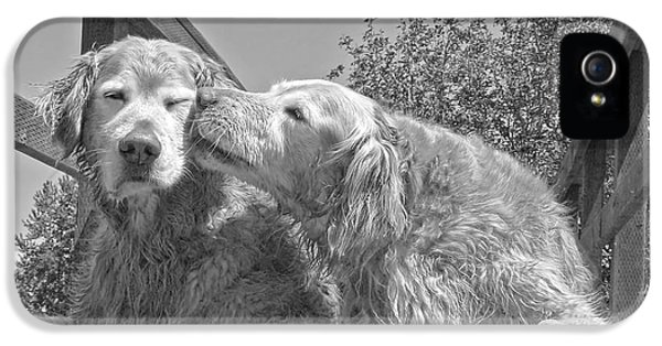 B iPhone 5 Cases - Golden Retrievers the Kiss Black and White iPhone 5 Case by Jennie Marie Schell