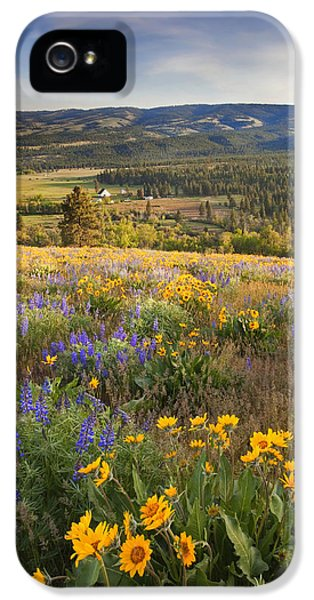 Lupine iPhone 5 Cases - Golden Valley iPhone 5 Case by Mike  Dawson