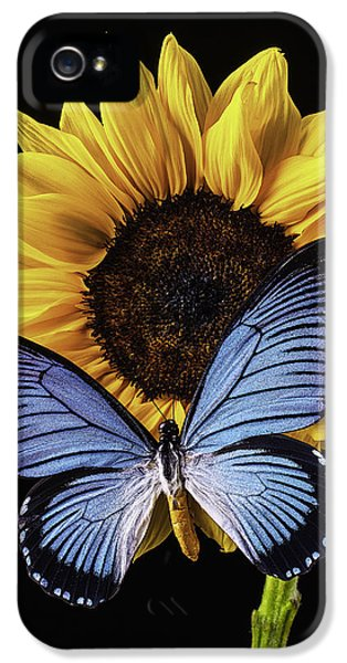 Softly iPhone 5 Cases - Gorgeous Blue Butterfly iPhone 5 Case by Garry Gay