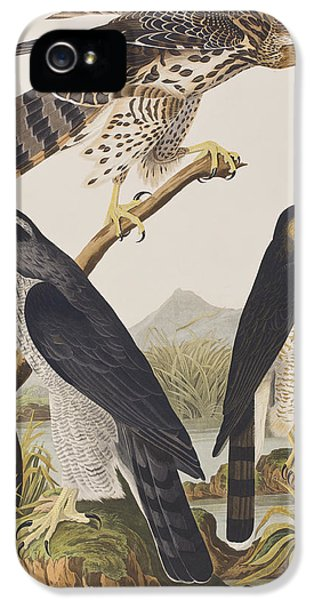 Goshawk And Stanley Hawk IPhone 5 / 5s Case by John James Audubon