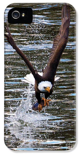 American Bald Eagle iPhone 5 Cases - Got It iPhone 5 Case by Mike Dawson