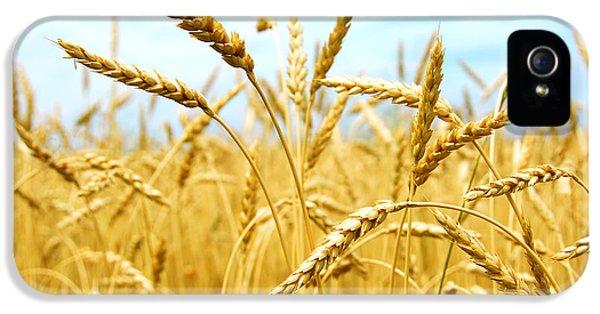 Grain Field IPhone 5 / 5s Case by Elena Elisseeva