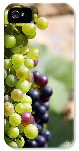 Agricultural iPhone 5 Cases - Grapes iPhone 5 Case by Jane Rix