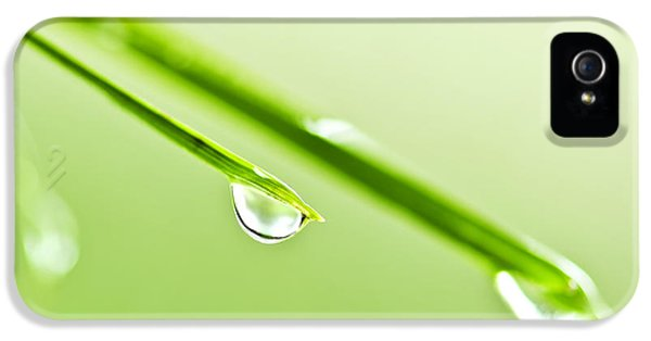 Dewdrop iPhone 5 Cases - Grass blades with water drops iPhone 5 Case by Elena Elisseeva