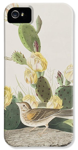 Grass Finch Or Bay Winged Bunting IPhone 5 / 5s Case by John James Audubon