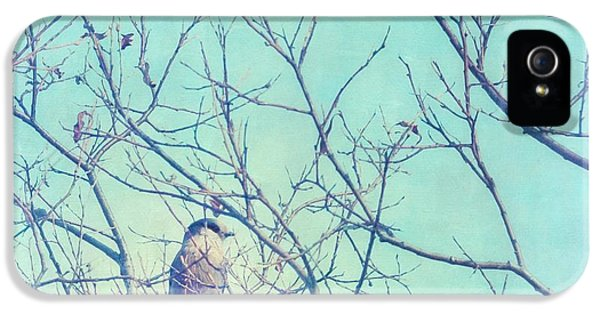 Lensbaby iPhone 5 Cases - Gray Jay In A Tree iPhone 5 Case by Priska Wettstein