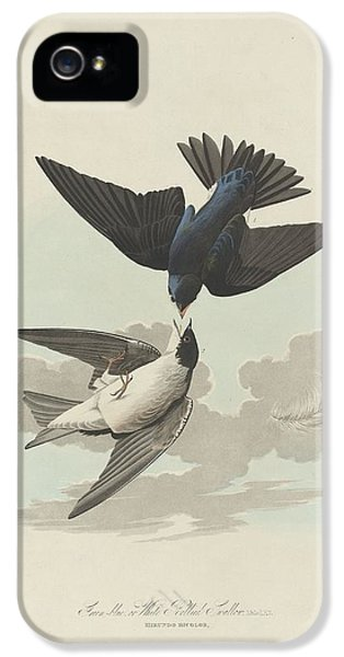 Green-blue Or White-bellied Swallow IPhone 5 / 5s Case by John James Audubon