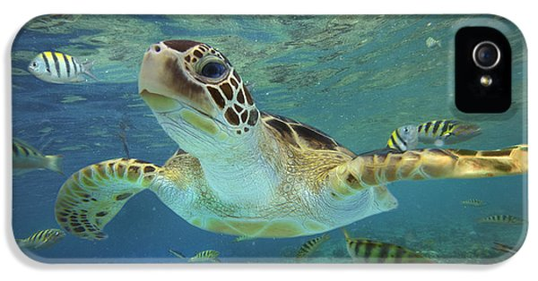 Image iPhone 5 Cases - Green Sea Turtle Chelonia Mydas iPhone 5 Case by Tim Fitzharris