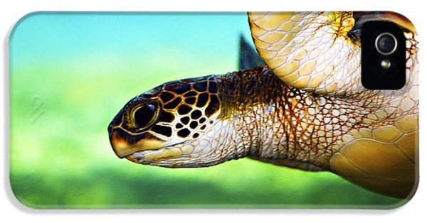 Animals iPhone 5 Cases - Green Sea Turtle iPhone 5 Case by Marilyn Hunt
