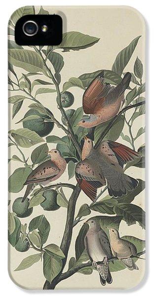 Ground Dove IPhone 5 / 5s Case by John James Audubon