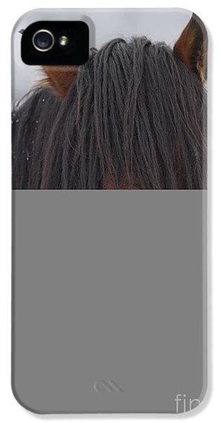 Mane iPhone 5 Cases - Haircut Needed iPhone 5 Case by Mike  Dawson