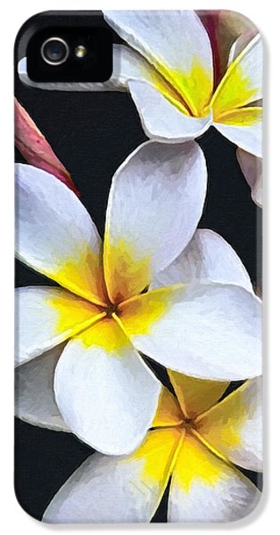 Yellow And White Plumeria Flower Frangipani iPhone 5 Cases - Hawaiian Dreaming iPhone 5 Case by David Millenheft