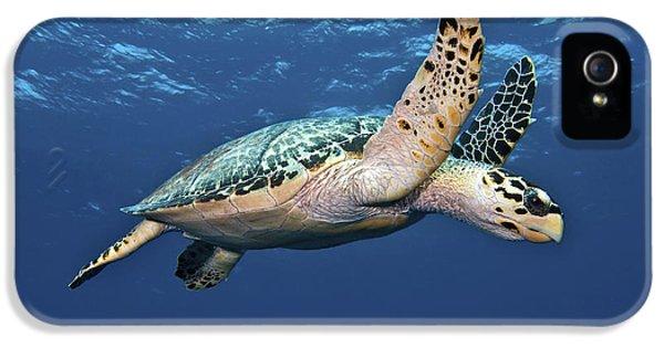 No People iPhone 5 Cases - Hawksbill Sea Turtle In Mid-water iPhone 5 Case by Karen Doody